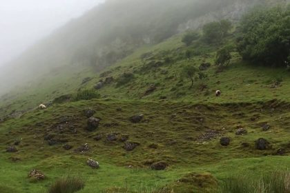 Sheeps, Fog and Invisible Elves